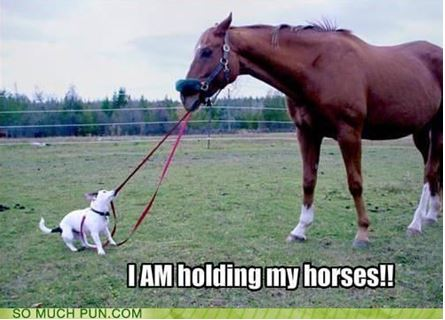 Hold you horse